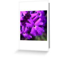 Macro Purple Flower Greeting Card