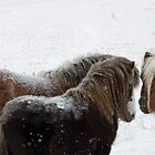 The Huddle, Miniature horses in Montana Snow by Donna Ridgway