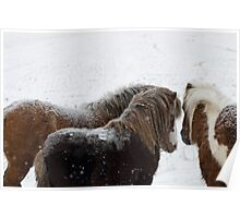 The Huddle, Miniature horses in Montana Snow Poster