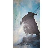Raven in the midst  Photographic Print