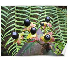 Dark Berries with Green Fern background Poster