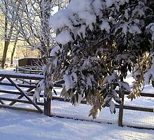 """Warm December Light"" by Merice Ewart Marshall - LFA"