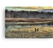 The Ducks at Huntley Meadows. Canvas Print