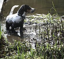 Muddy pup by weecoughimages