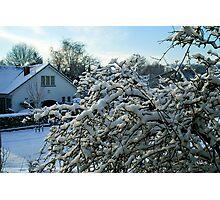 Winter in Edegem - Belgium Photographic Print