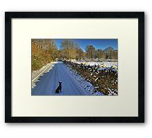 Dead Skunk In The Middle Of The Road.. Framed Print