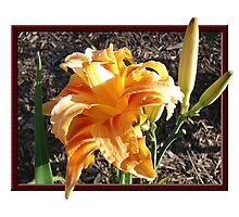 Daylilly at Tregarthen in Feb 2010 Photographic Print