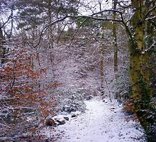 Winter Wonderland, Upton Woods, Poole by Songwriter