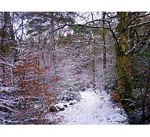 Winter Wonderland, Upton Woods, Poole Photographic Print