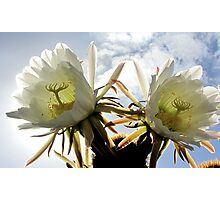 Night blooming cacti 3# Photographic Print