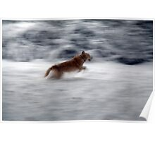 Retriever in the Snow Poster