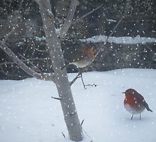 2 Robins in the garden  by Ann Persse