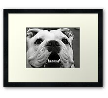 Butch the Bulldog Framed Print