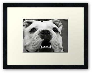 Butch the Bulldog by Marcia Rubin