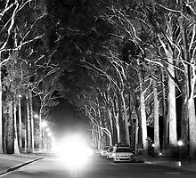 Avenue of light by KarynL