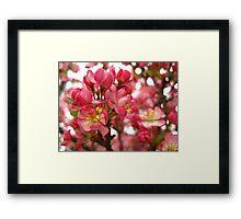 Pink! Framed Print