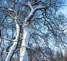 Snowy trees by Stephanie Owen