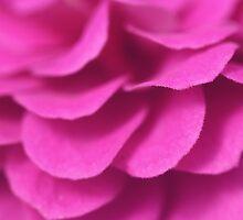Pink Zinnia by decorartuk