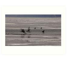 Bald Eagles and Their Shadows on the Mississippi Art Print