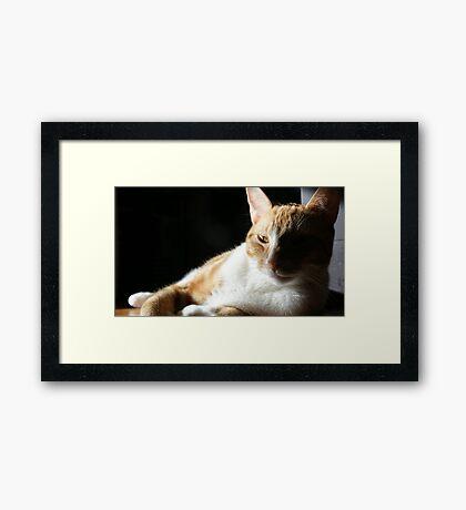 Sly kitten Framed Print