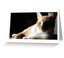 Sly kitten Greeting Card