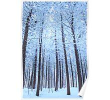 Snow Trees Poster