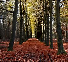 Forestry by franceslewis