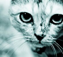Meow....where are you mommy? : On Featured Work by Kornrawiee