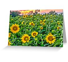 """""""Starry, Starry Fields"""" - sunflowers in bloom at sunset Greeting Card"""