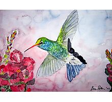 Desert Hummingbird Photographic Print