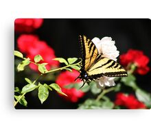 Red, White & Butterfly! Canvas Print