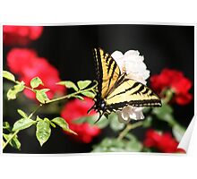 Red, White & Butterfly! Poster