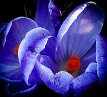 Purple Flower by KristinNelso