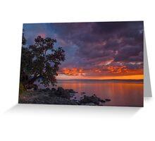 Pohutukawa Sunset Greeting Card
