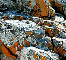 Colouful Rocks at Rocky Cape National Park,Tasmania, Australia. by kaysharp