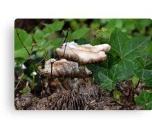 Fungi in the garden . lyme .Dorset UK Canvas Print