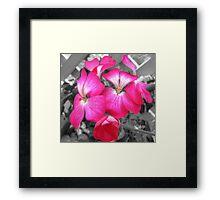 simply pink Framed Print