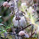 Bird Silhouette by dandefensor