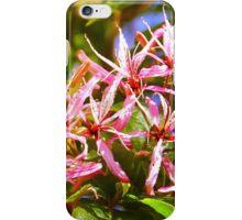 Cape Chestnut Tree Flower in Nairobi, KENYA iPhone Case/Skin