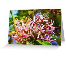 Cape Chestnut Tree Flower in Nairobi, KENYA Greeting Card