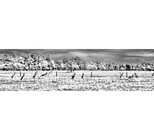 Roos in the top paddock B+W Photographic Print