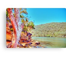 Bobbin Head, NSW, November 2010 Canvas Print