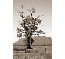 The Cazneaux Tree Photographic Print