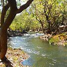 Douglas River by Flo Wetherley