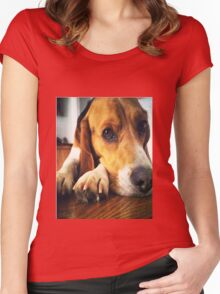 beagle  Women's Fitted Scoop T-Shirt
