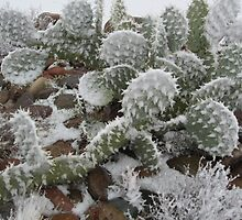 Prickly Pear in Snow by Allegra Brookey