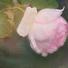The pink Rose Card 2 by julie anne  grattan