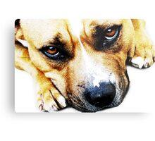 Bull Terrier Eyes Metal Print