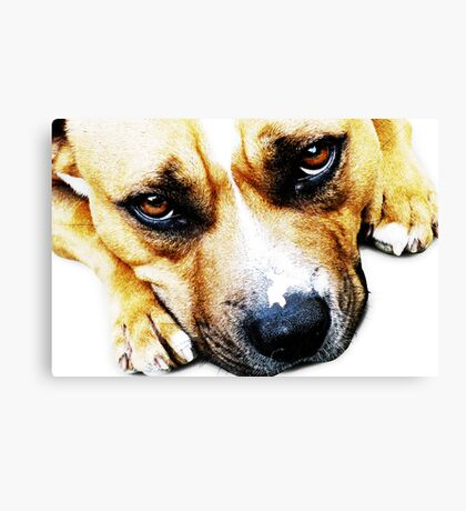 Bull Terrier Eyes Canvas Print