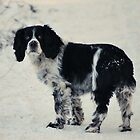 Tasha In The Snow by Stan Owen